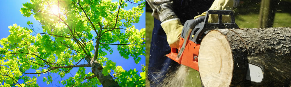 Tree Services Polk City